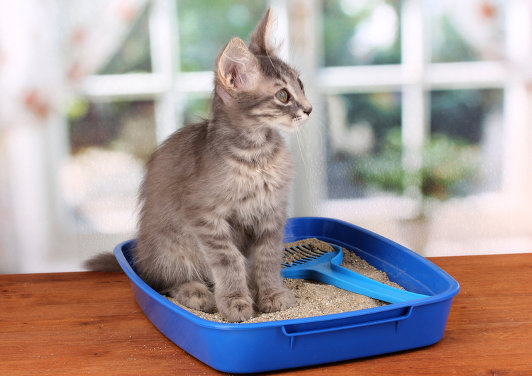 Best Litter Boxes for Cat