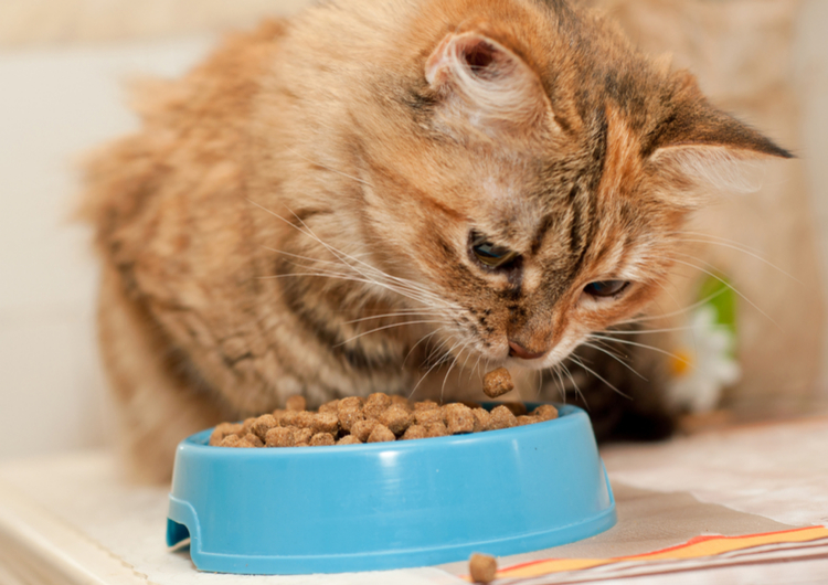 Healthiest Dry Food for Cats